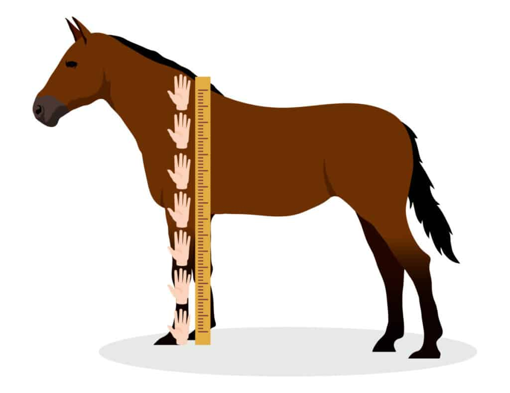Horses Are Measured In Hands