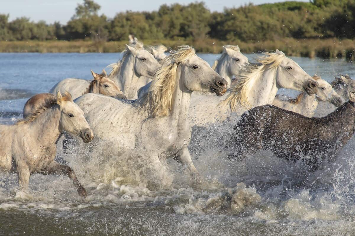 What Is A Group Of Horses Called