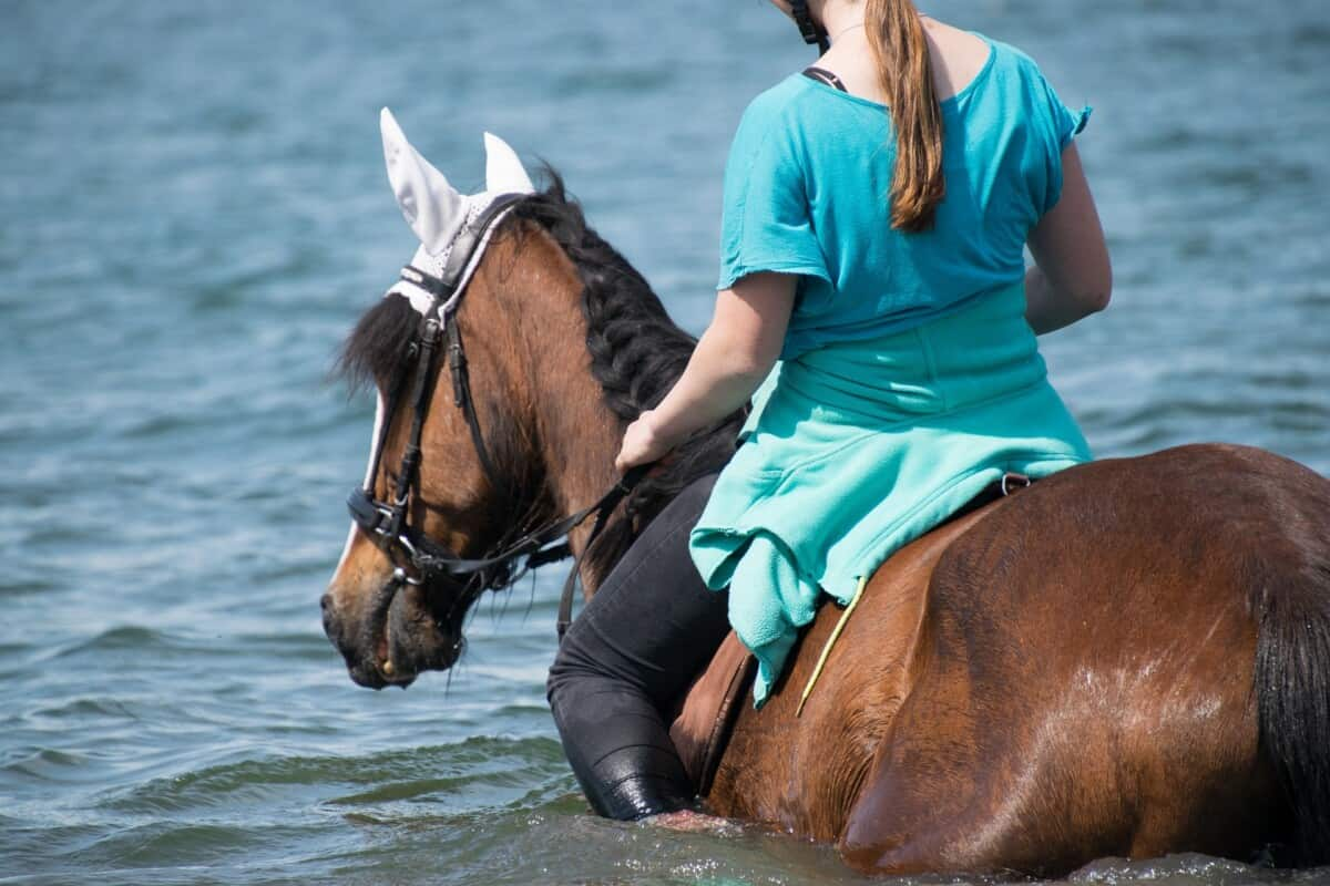 Horse Swimming Whilst Being Ridden