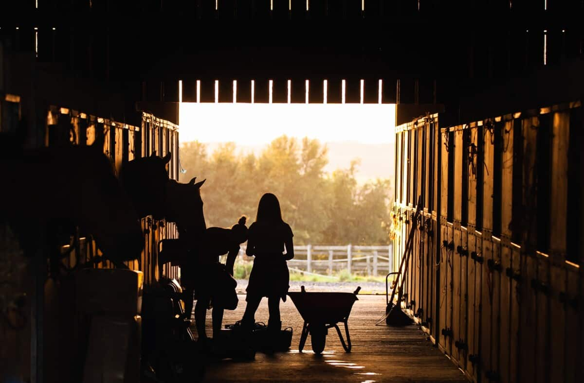 How Much Does It Cost To Board A Horse