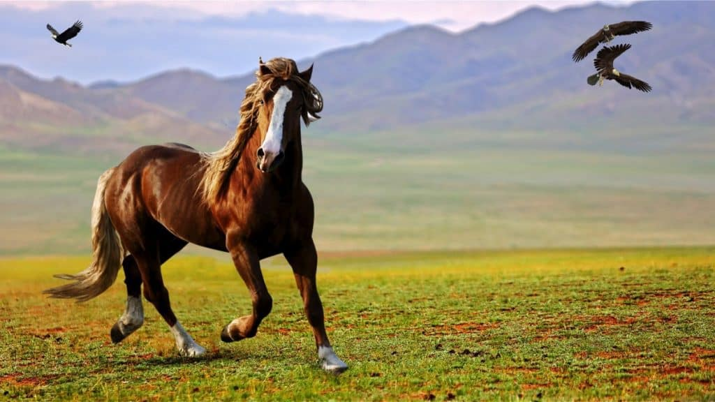 Beautiful Horse In The Wild