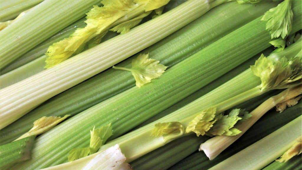 Can Horses Eat Celery
