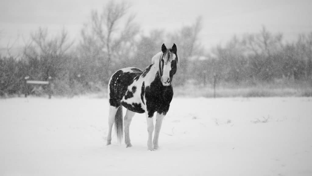 How Cold Can Horses Tolerate