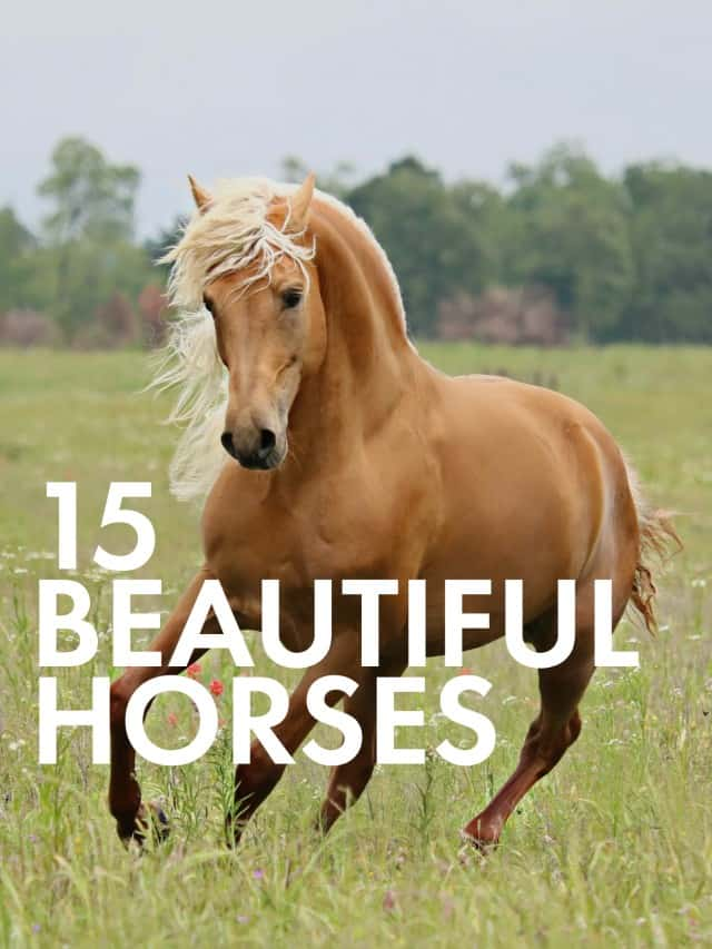 15 Of The Most Beautiful Horses