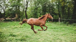 Fast Horse