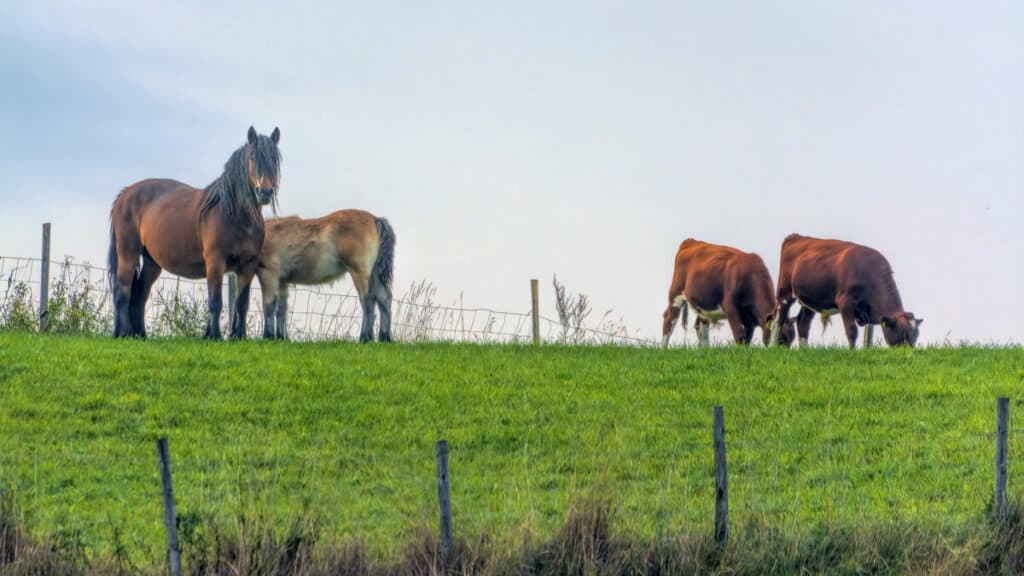 Horses And Cows in A Field - Do Horses Produce Methane?