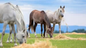 Horses Grazing In A Field Outdoors