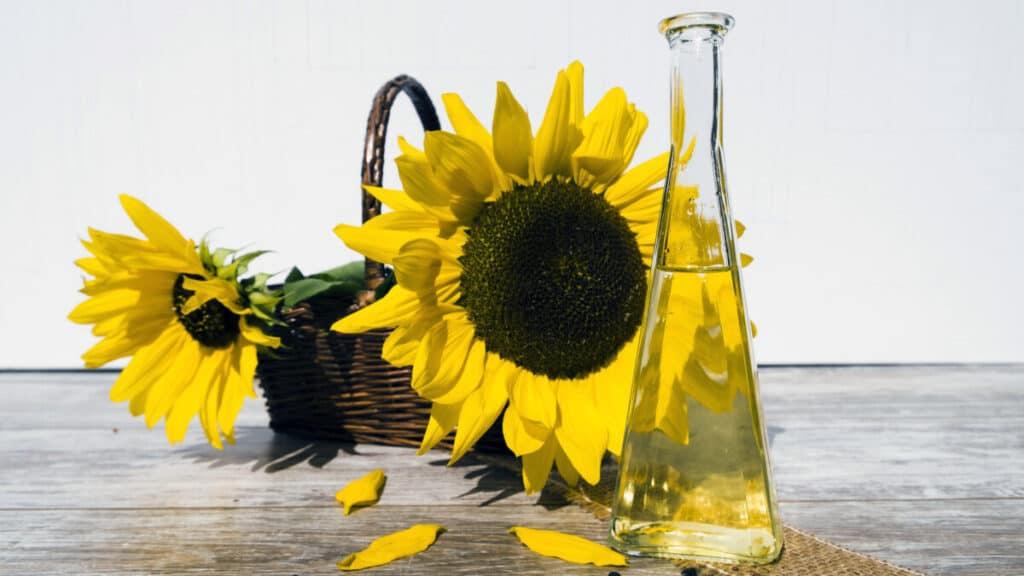 Is Sunflower Oil Good For Horses?